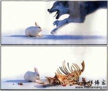 《浅谈兔子是怎样吃掉狼的》来看企业管理的发展